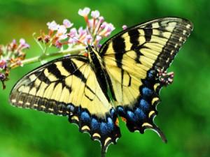 Vlinders in je buik bestaan echt!