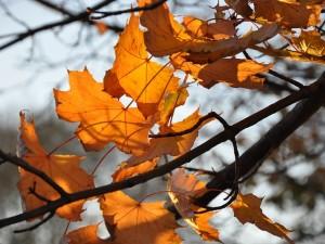 Herfst; 5 redenen waarom het wél leuk is!