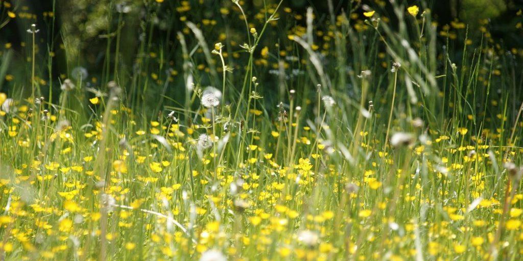 meadow-123280_1280